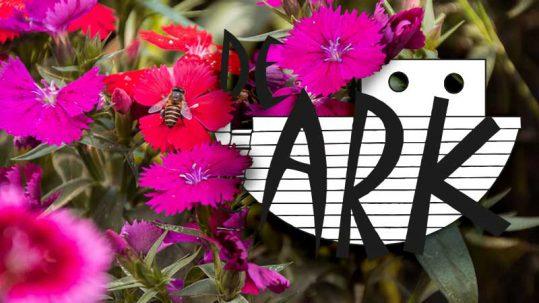 Werkgroep Bloemenverkoop - bloemen - De Ark, Battel